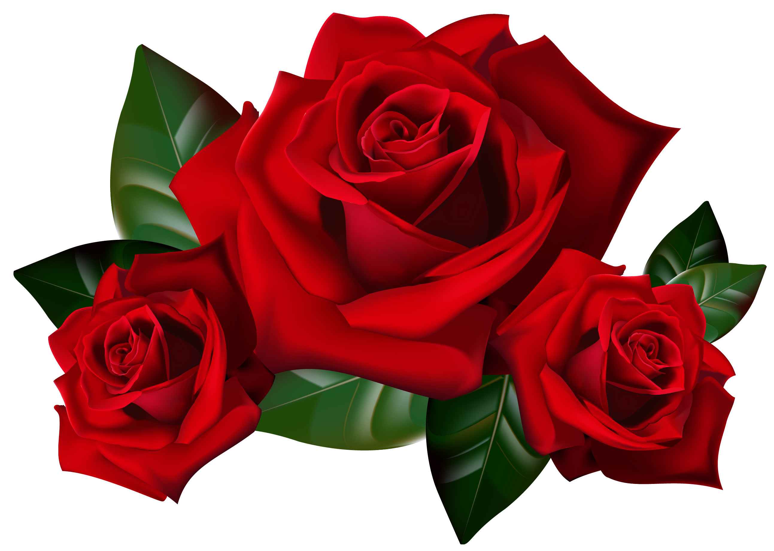 Red png picture gallery. Clipart roses valentines