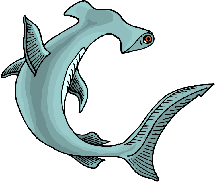 picture clipart shark