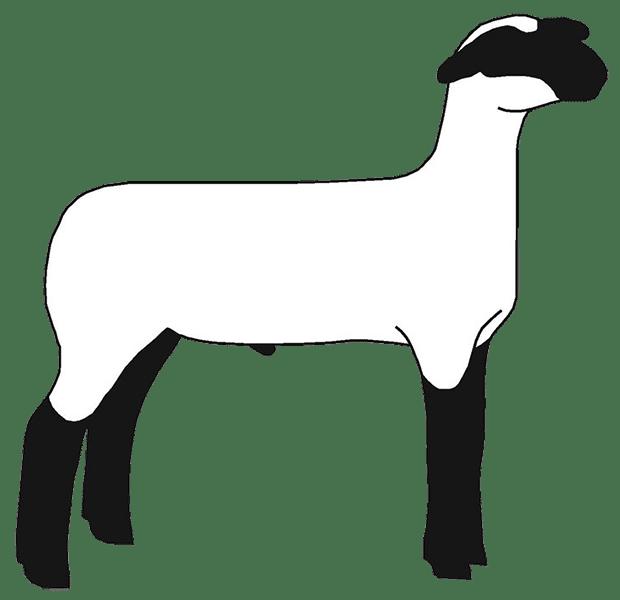 Lamb clipart shee. Free show clip art