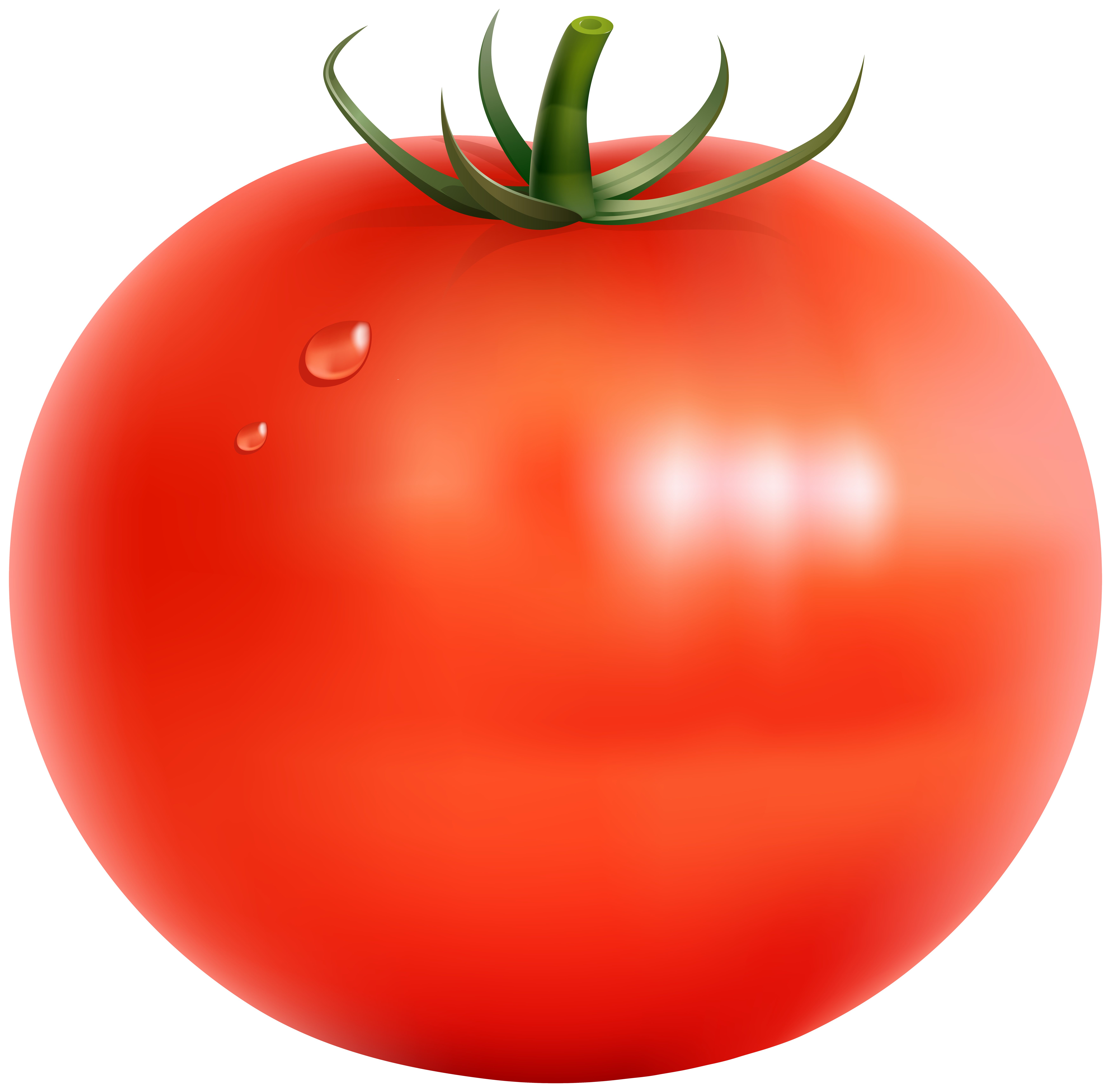 Tomatoes clipart clear background. Tomato transparent png clip