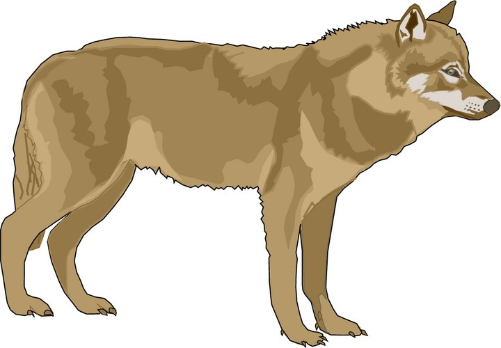 coyote clipart brown wolf