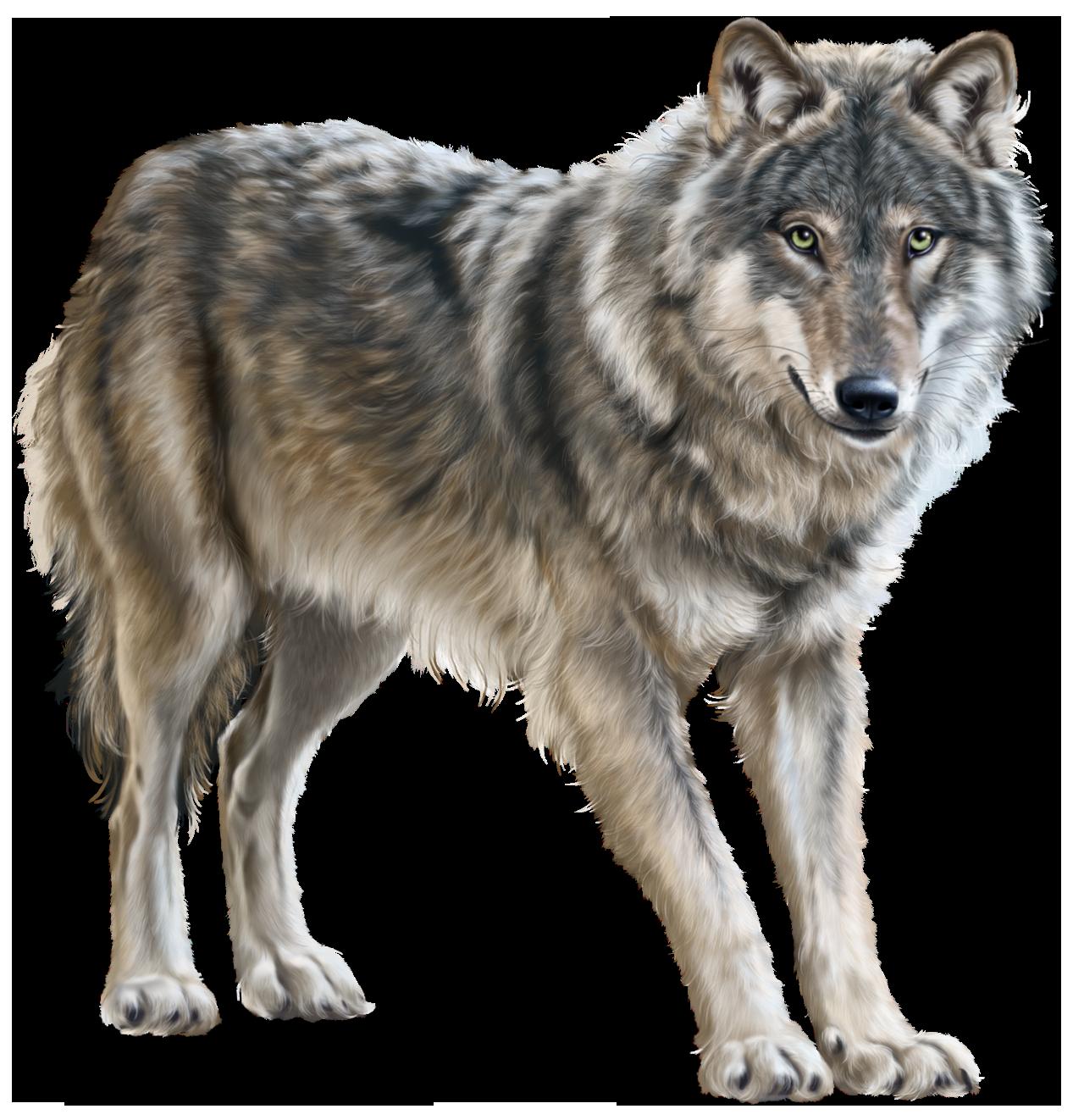Png clip art best. Wolf clipart standing