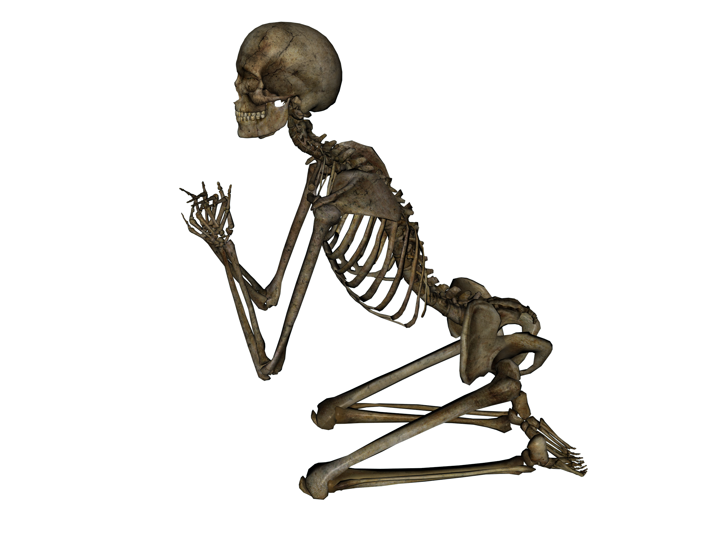 Pigs clipart skeleton. Human eleven isolated stock