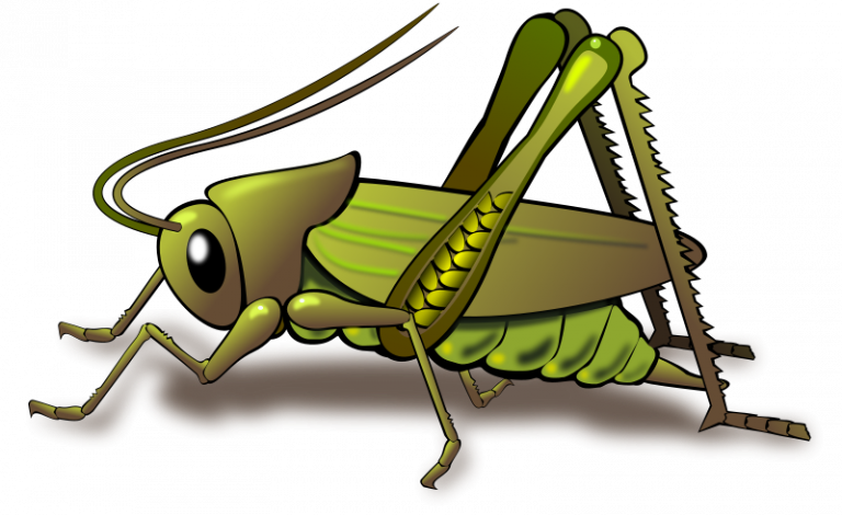 Panda free images money. Cricket clipart insect