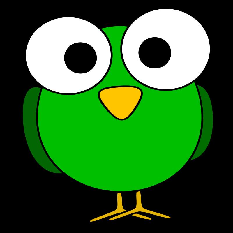 Eyeball bird eye