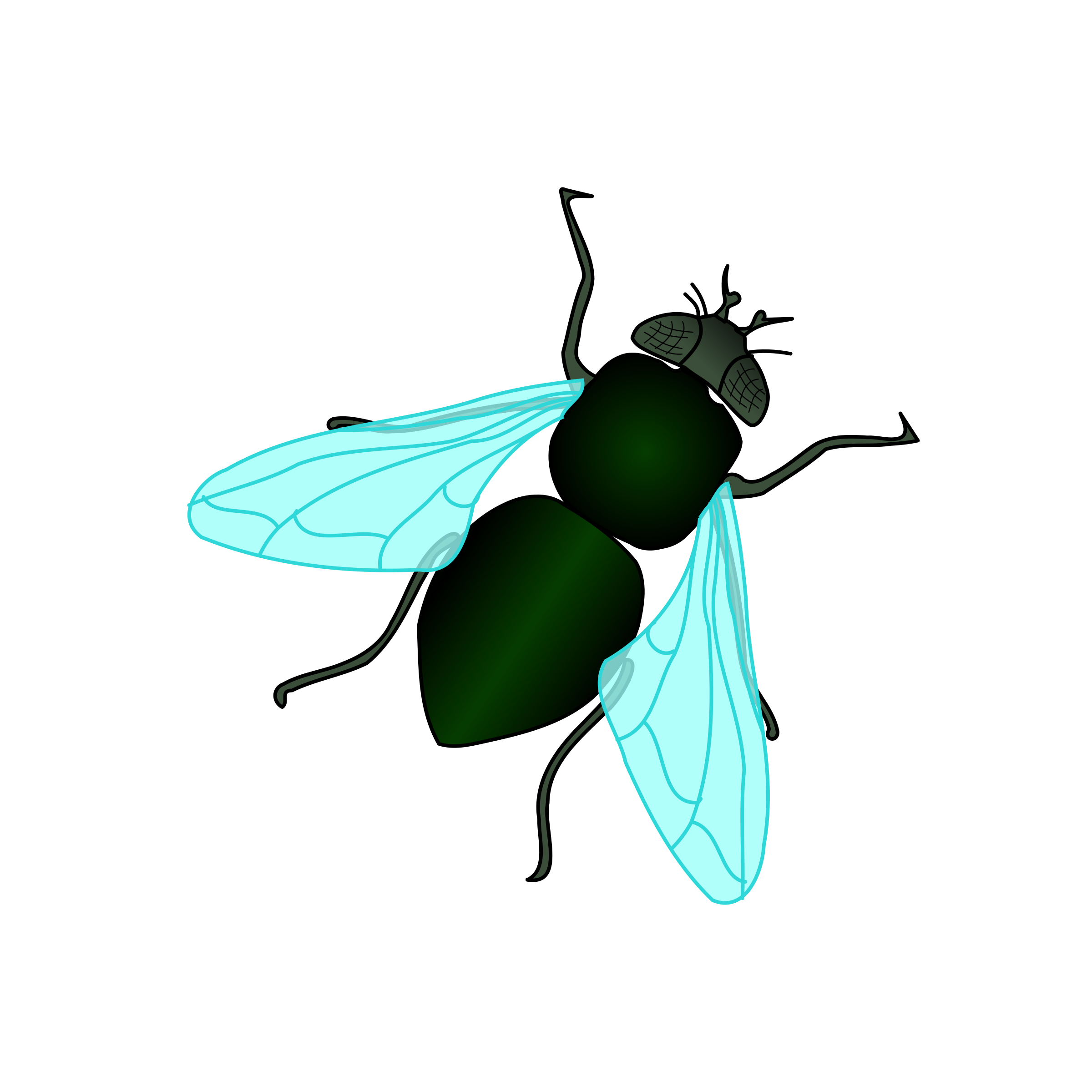 Bug house fly free. Insects clipart desert insect