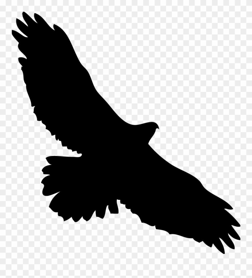 Eagles kite bird in. Eagle clipart hawk