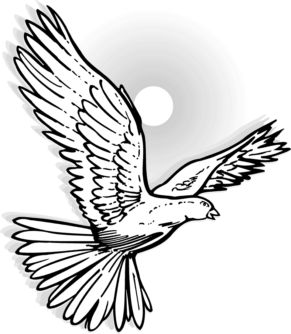 Faith clipart dove. Line drawing at getdrawings