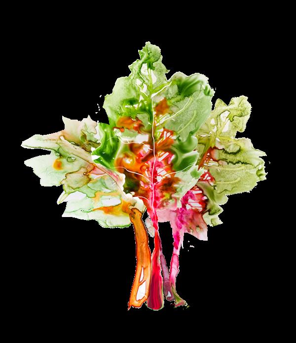 Veggies for holli thompson. Clipart kite watercolor