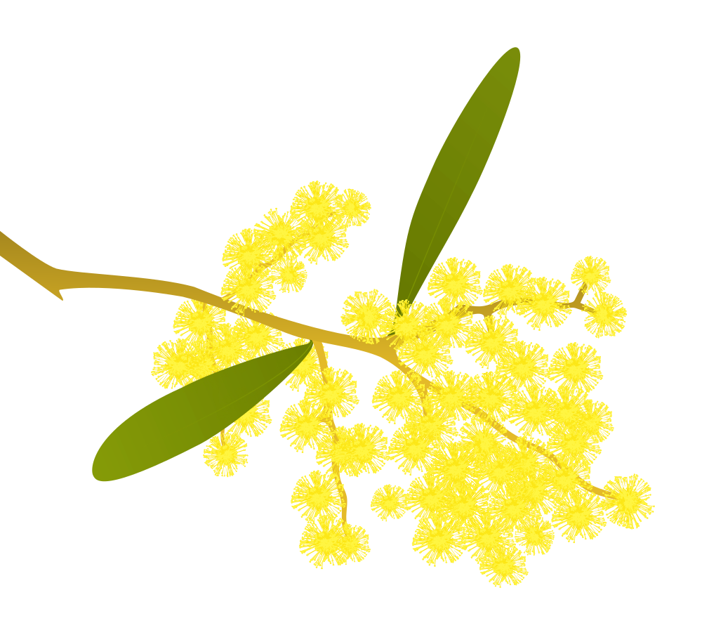 Golden wattle acacia pycnantha. Leaf clipart black locust