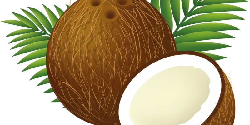 Ask umbra are coconut. Palm clipart comic