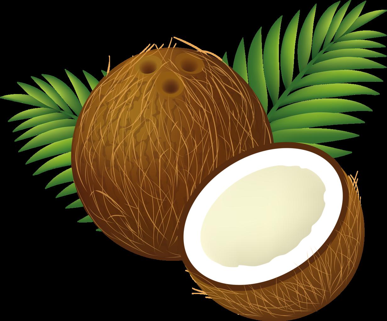Ask umbra are coconut. Fruits clipart buko