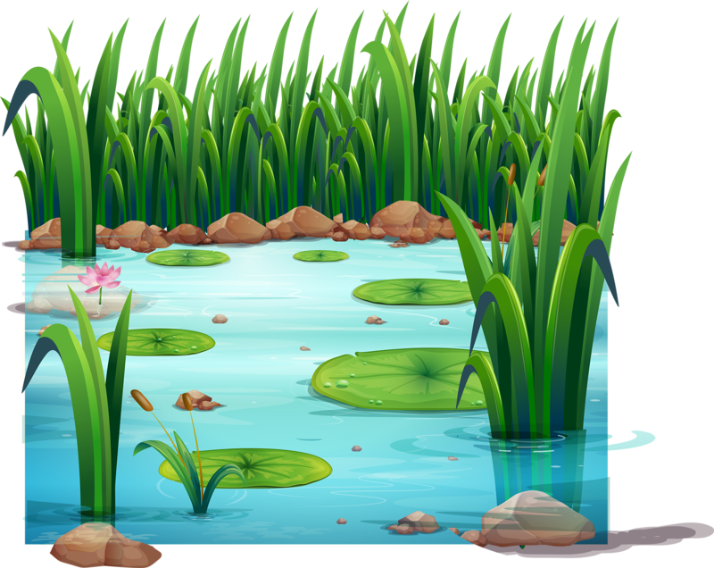 Lake clipart frog pond. Drawing clip art transprent