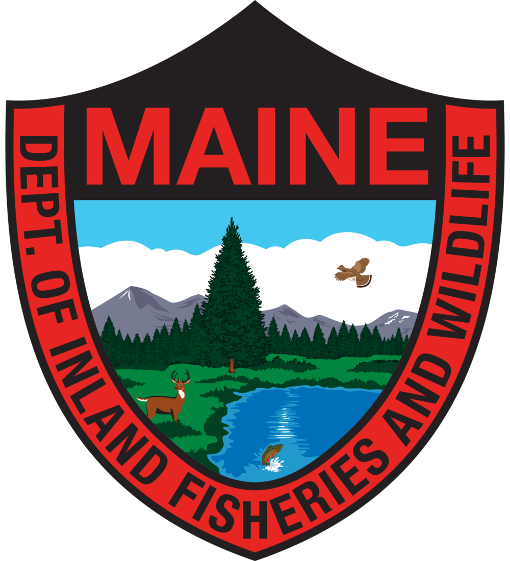Trout clipart brook trout. Maine nfc initiates heritage