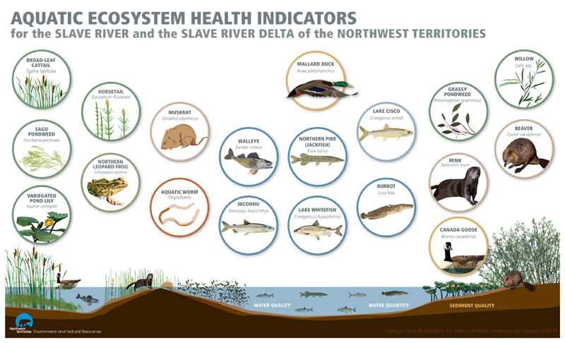 How do we measure. Desert clipart ecosystem arctic