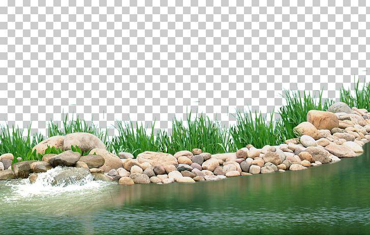 Lake clipart spring pond. Aquatic plant png