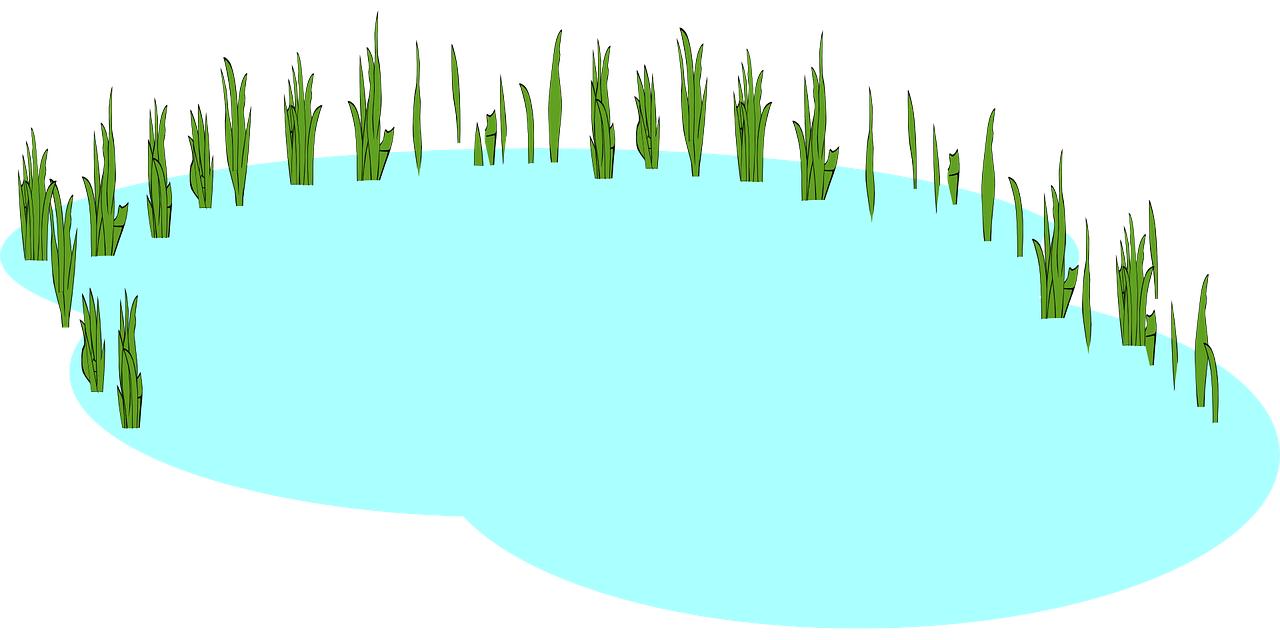 Lake clipart pond life.  collection of freshwater
