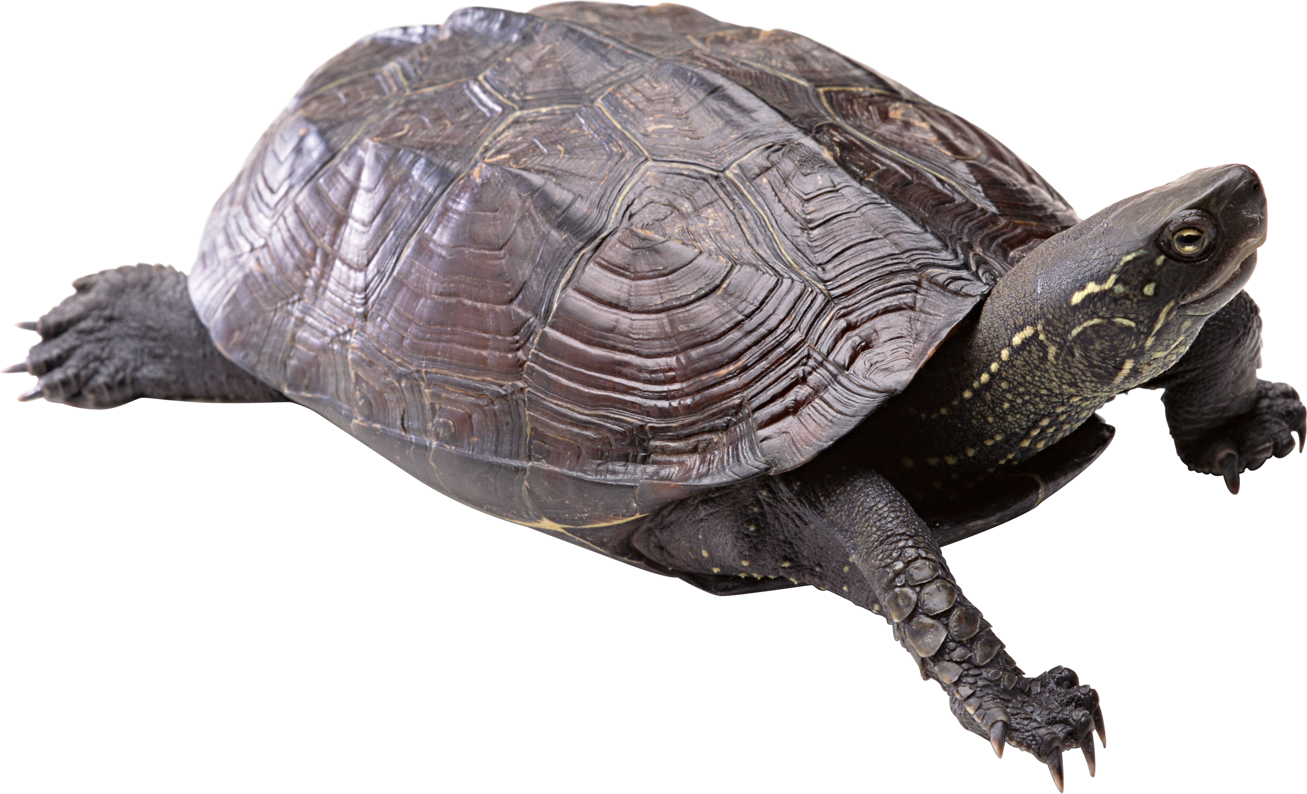 Png images free download. Lake clipart turtle
