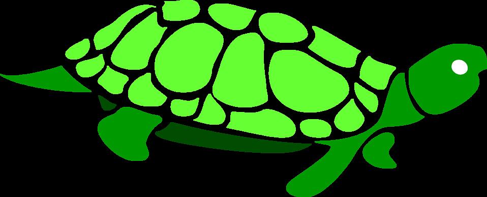 Free stock photo illustration. Clipart turtle green turtle