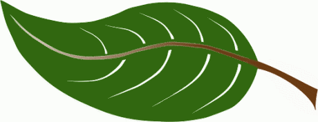 Clipart leaf. Clip art free panda