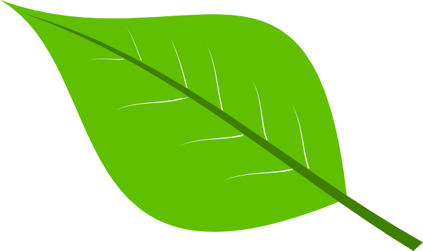 Large green leaves . Clipart leaf