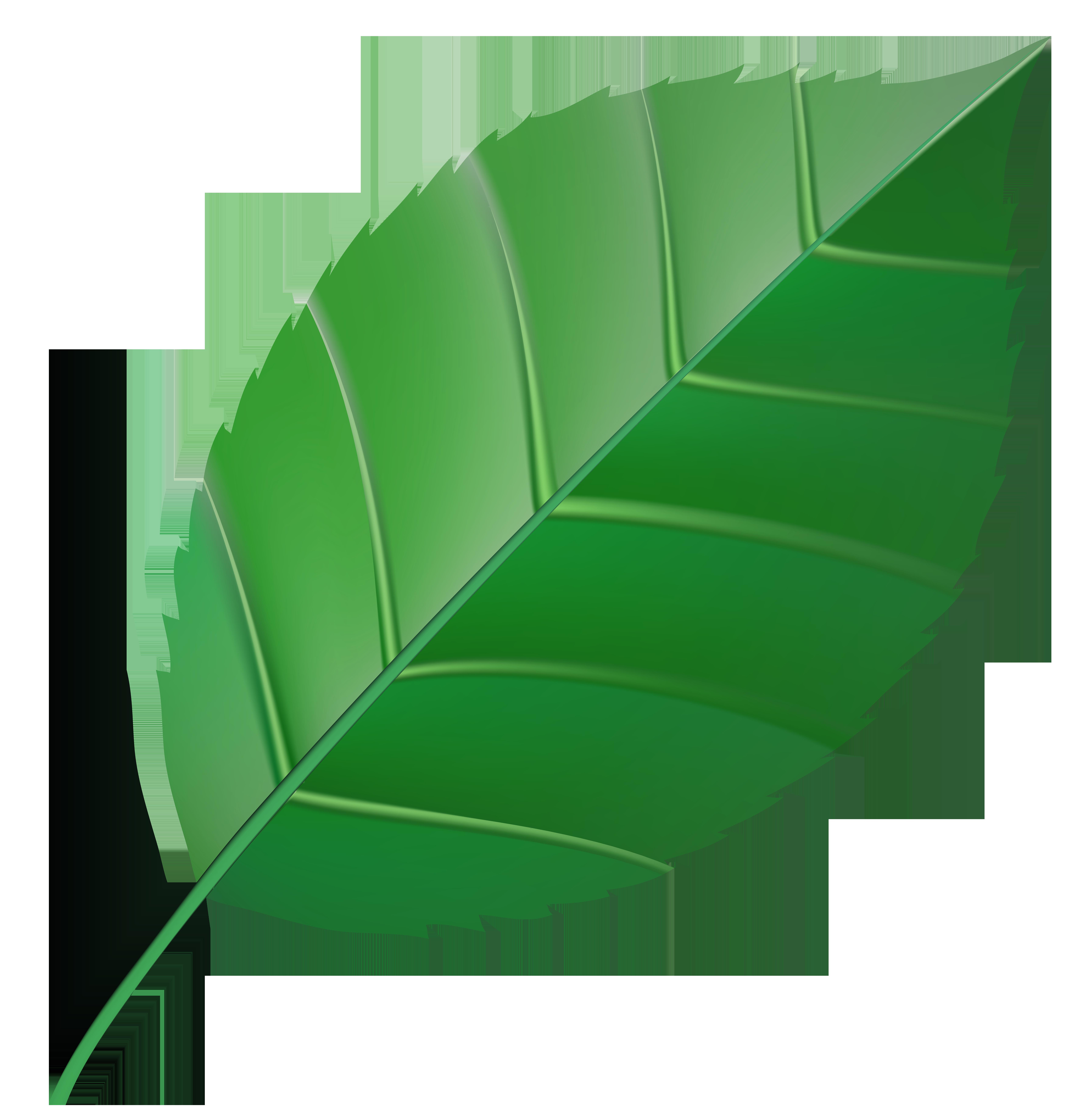 Green transparent clip art. Leaf clipart