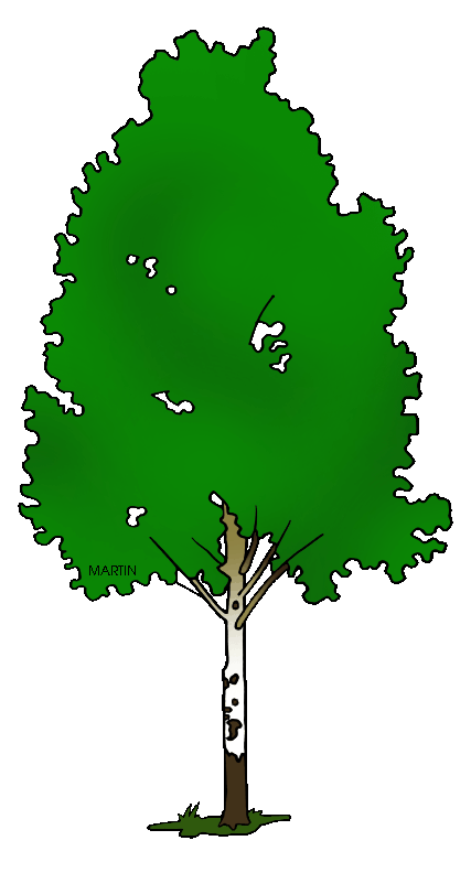 Leaf clipart birch tree. United states clip art