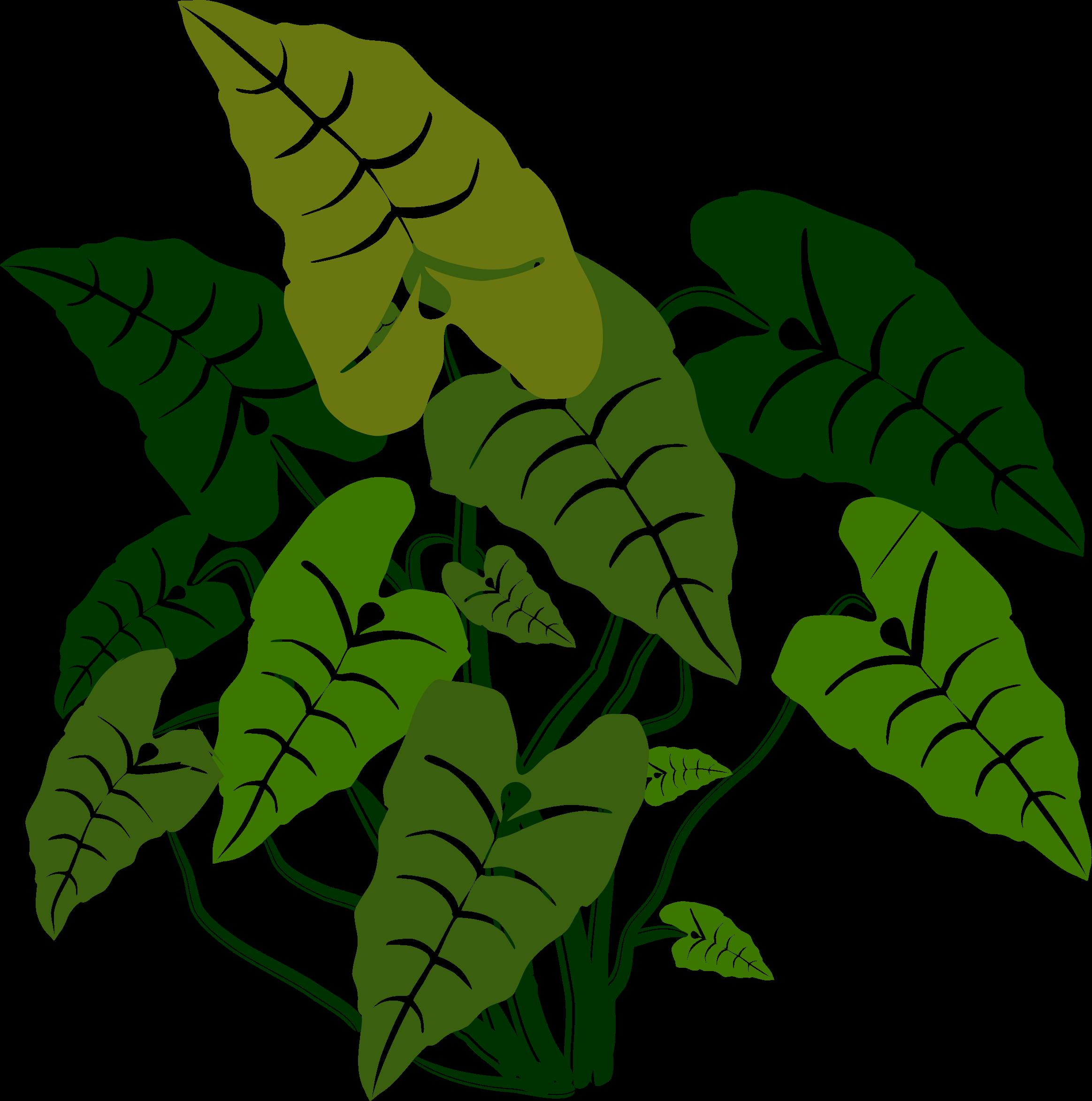 Elephant ears big image. Clipart leaf cactus