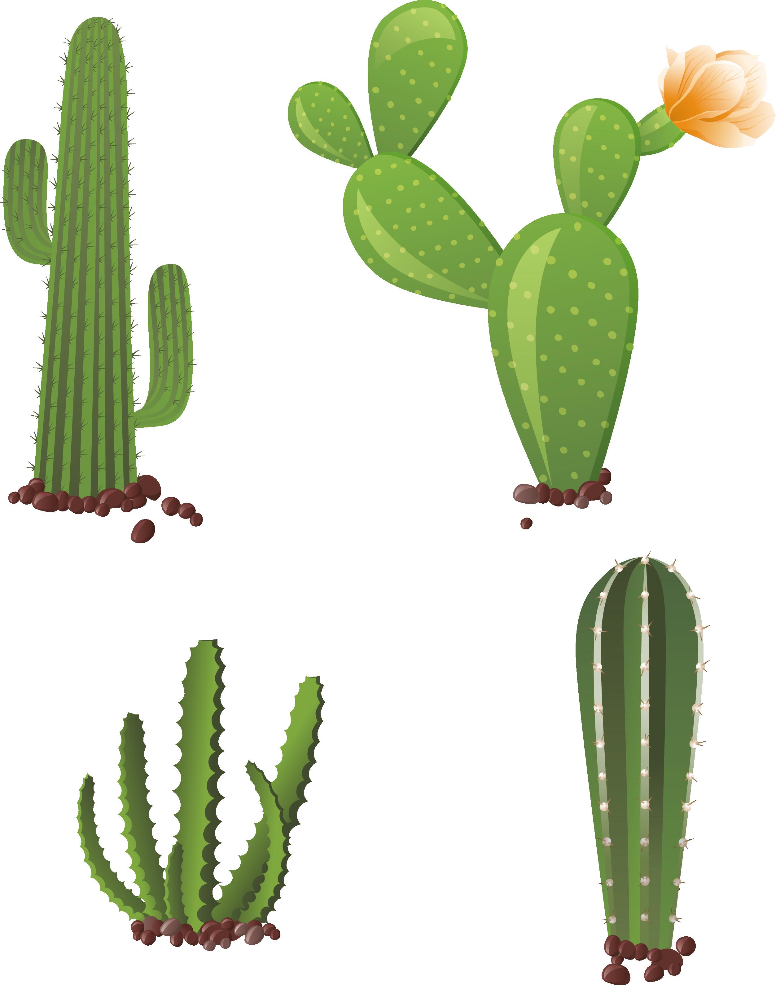 Cactaceae clip art hand. Desert clipart nopale