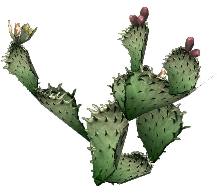 Clipart leaf cactus. Png photos transparentpng