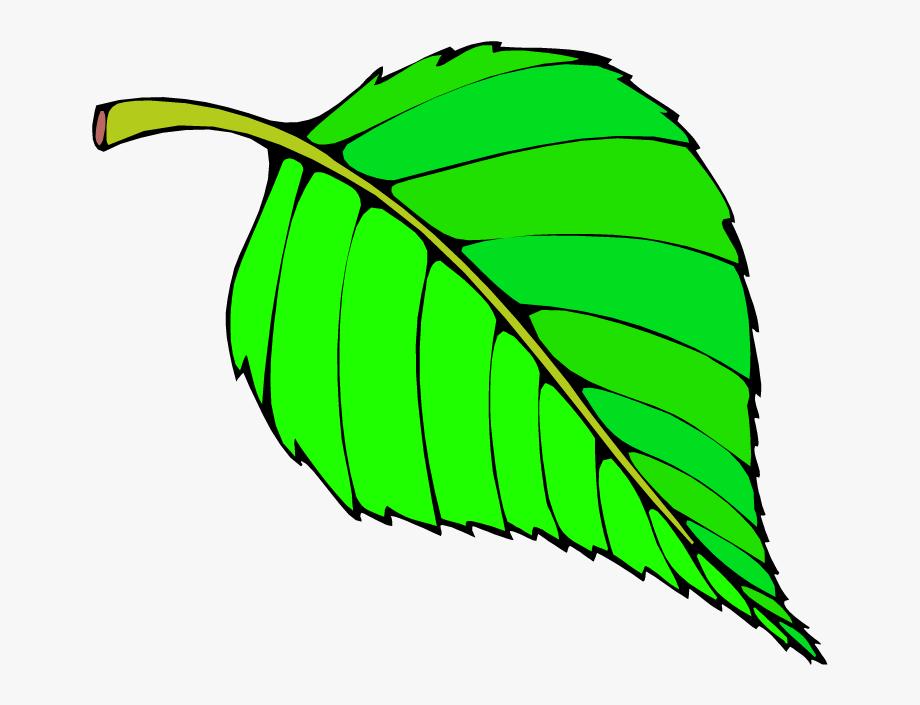 Clipart leaves color. Big leaf green colour