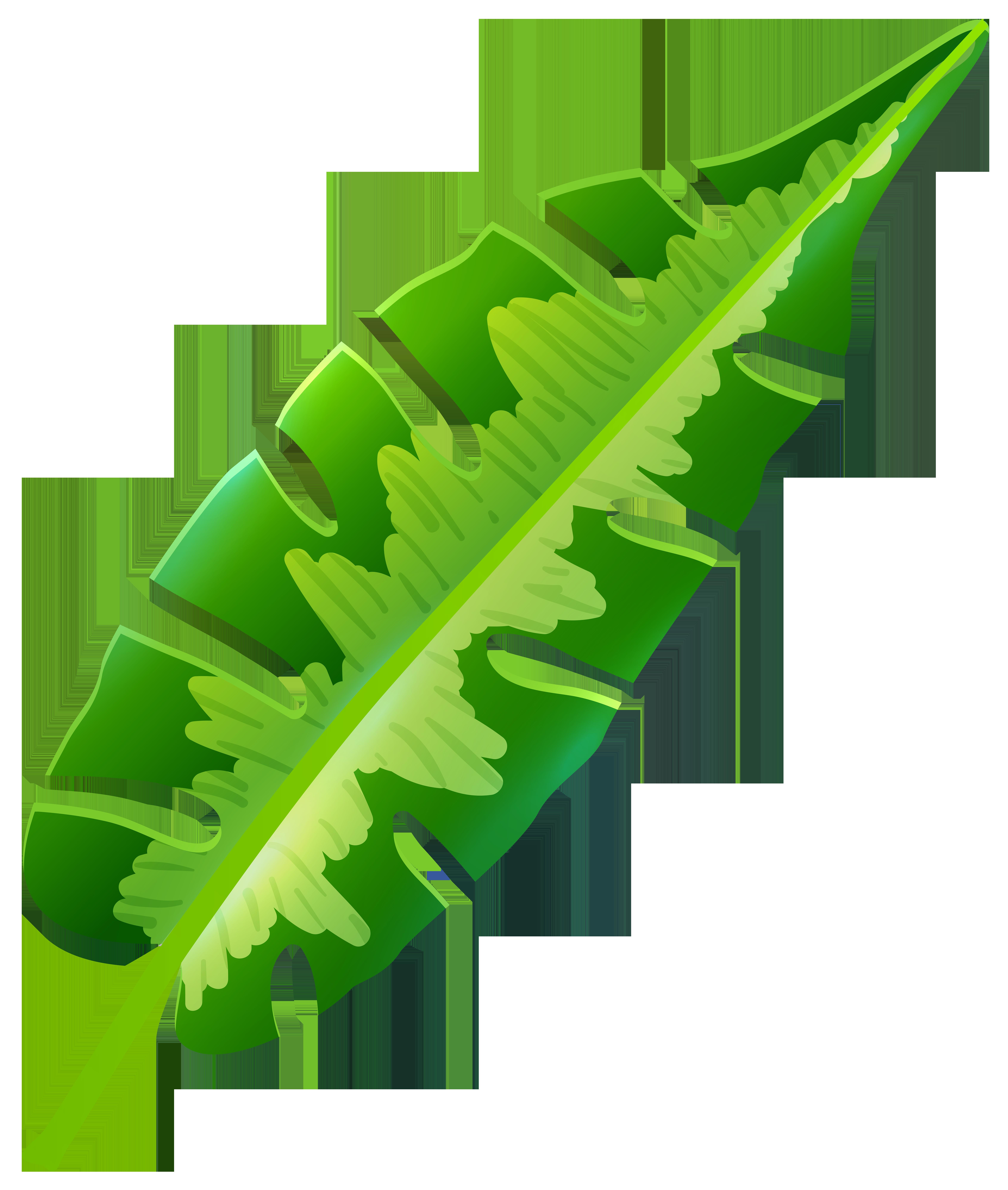 Leaf png clip art. Clipart sun tropical