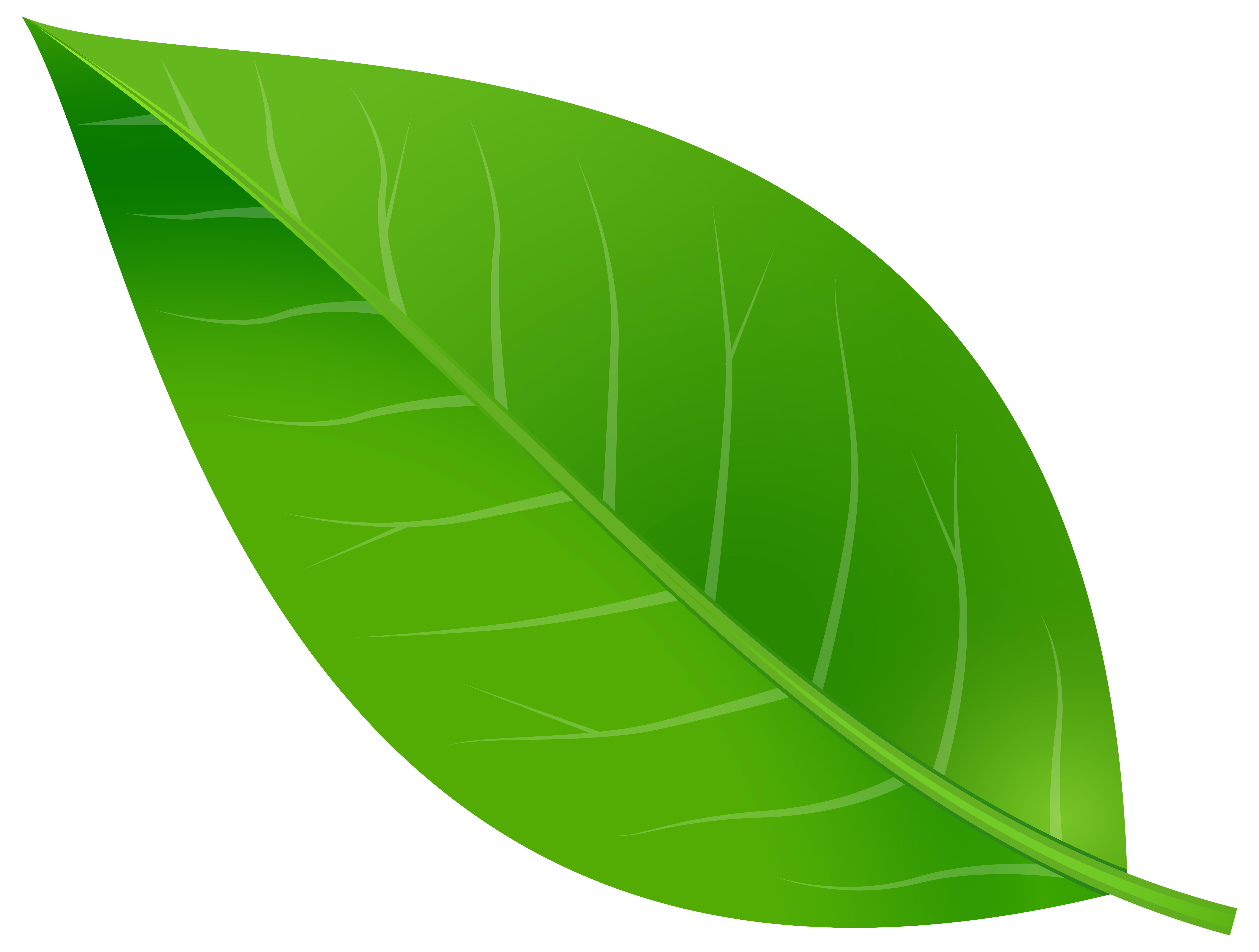 Clip art spring png. Leaf clipart transparent background