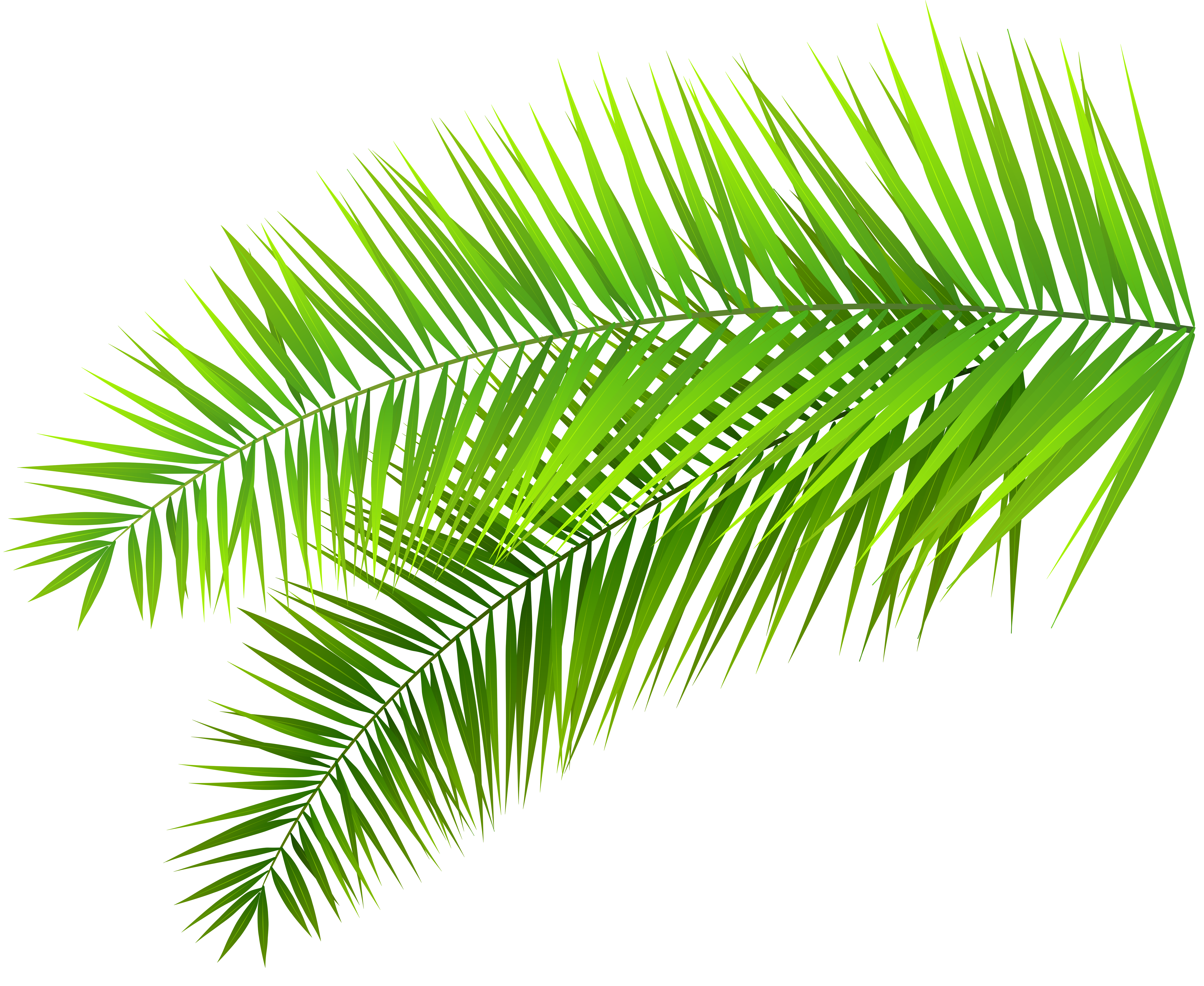 collection of leaves. Decorative clipart branch