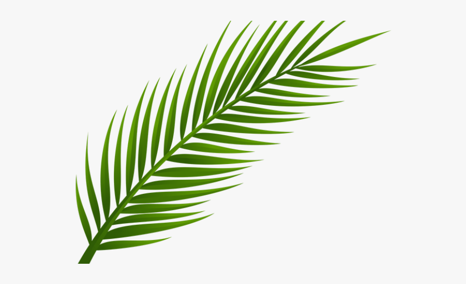 Coconut clipart branch. Drawn palm tree leaf
