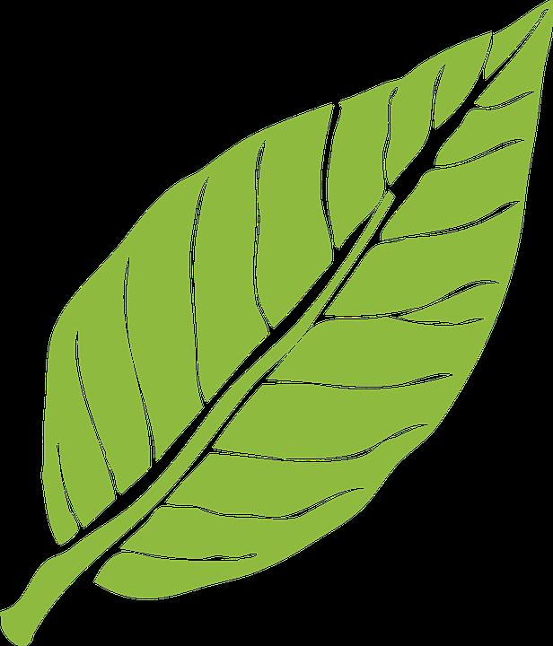 leaf clipart daun
