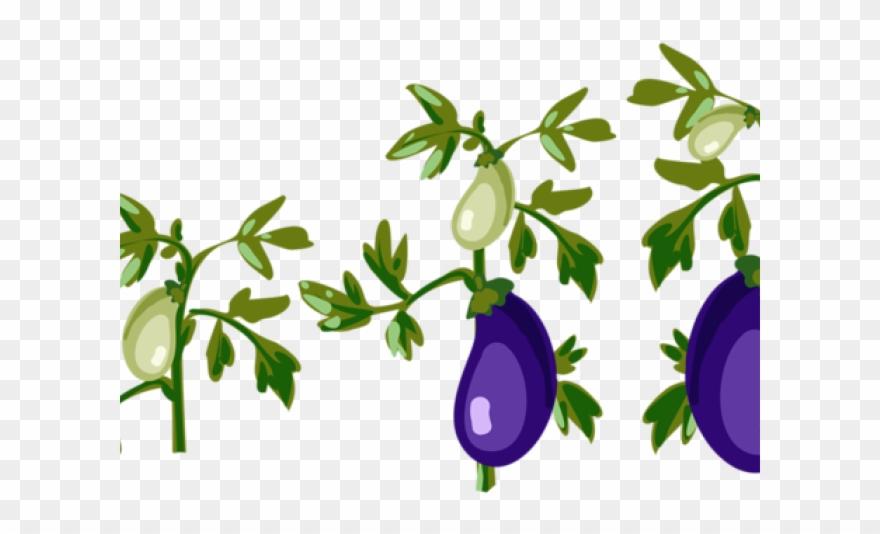 Eggplant clipart leaf. Cartoon tomato plant png