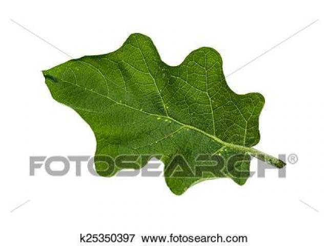 Free download clip art. Eggplant clipart leaf