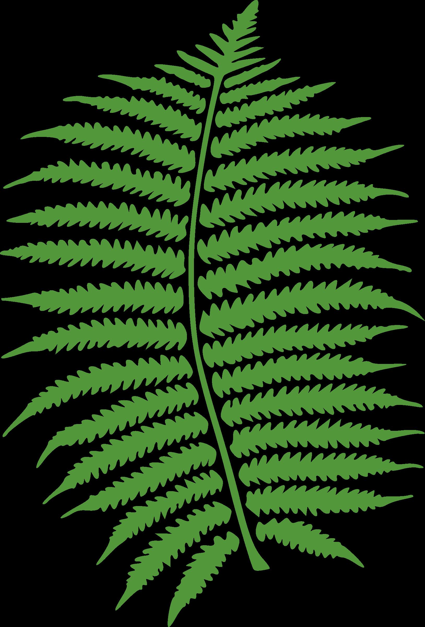 Big image png. Clipart leaves fern