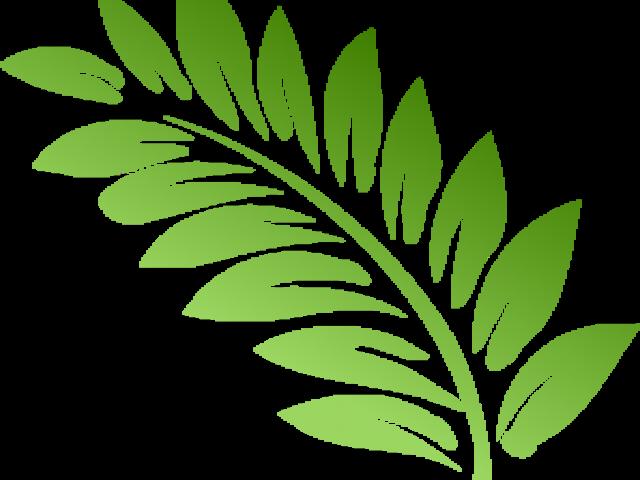 Leaf cliparts brach free. Clipart leaves fern