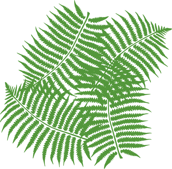 Leaf clipart fern. Four leaves clip art