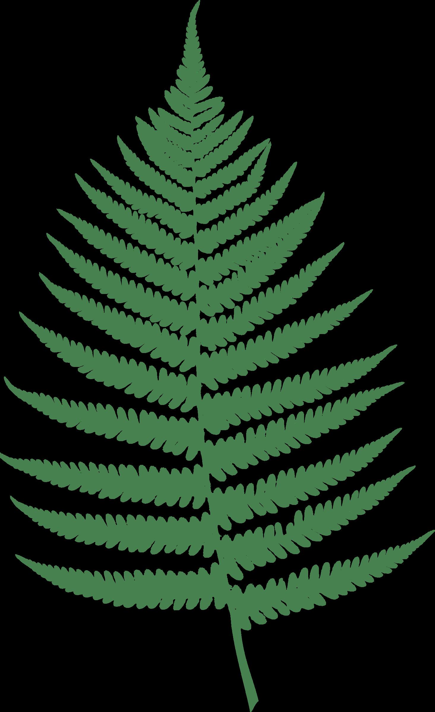 leaf clipart fern