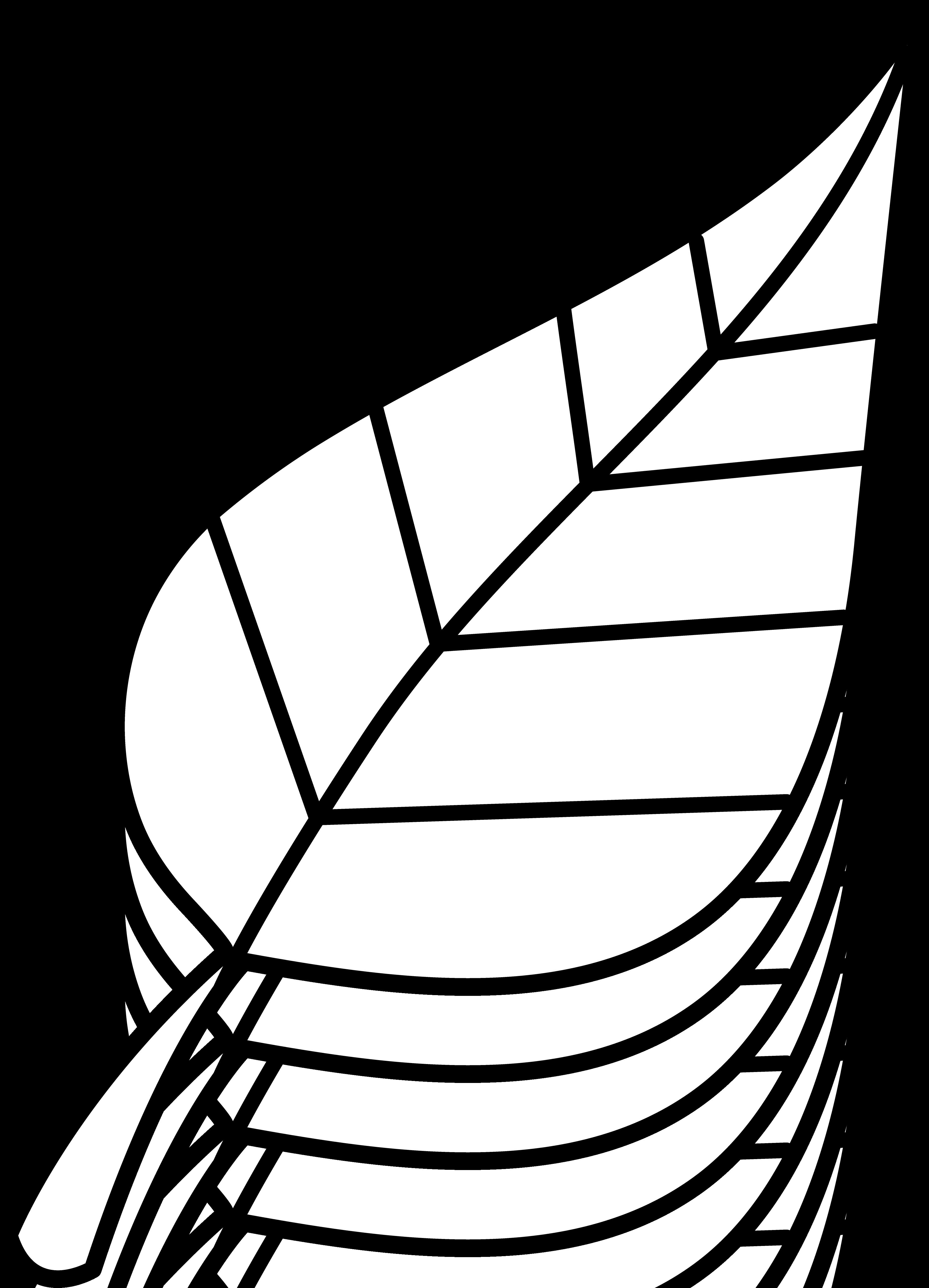 Leaf clipart black locust. Google image result for