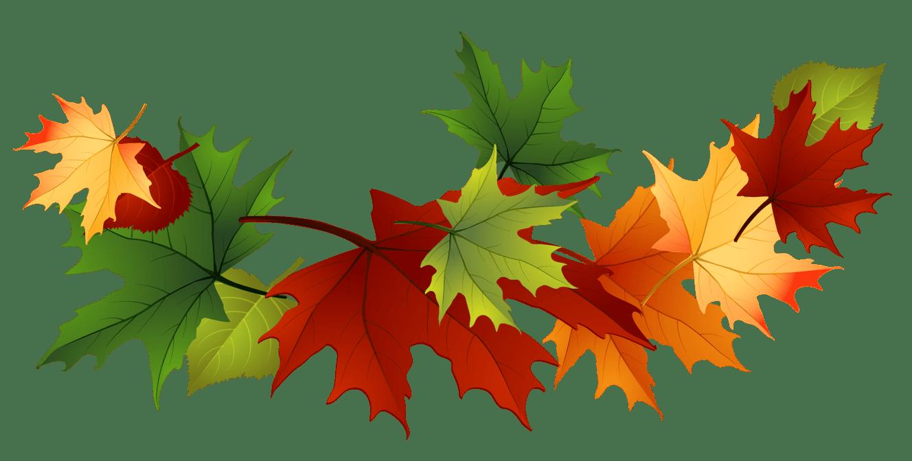 Maple leaf transparent png. Garland clipart leaves