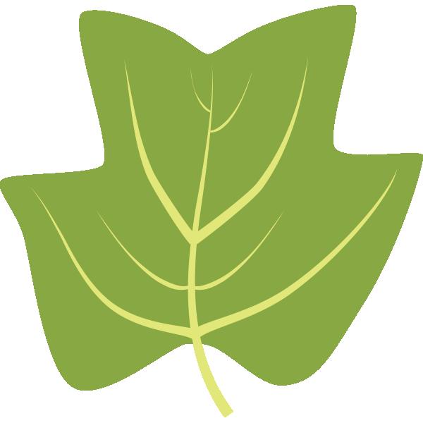 Leaf id tuliptree. Clipart leaves tulip
