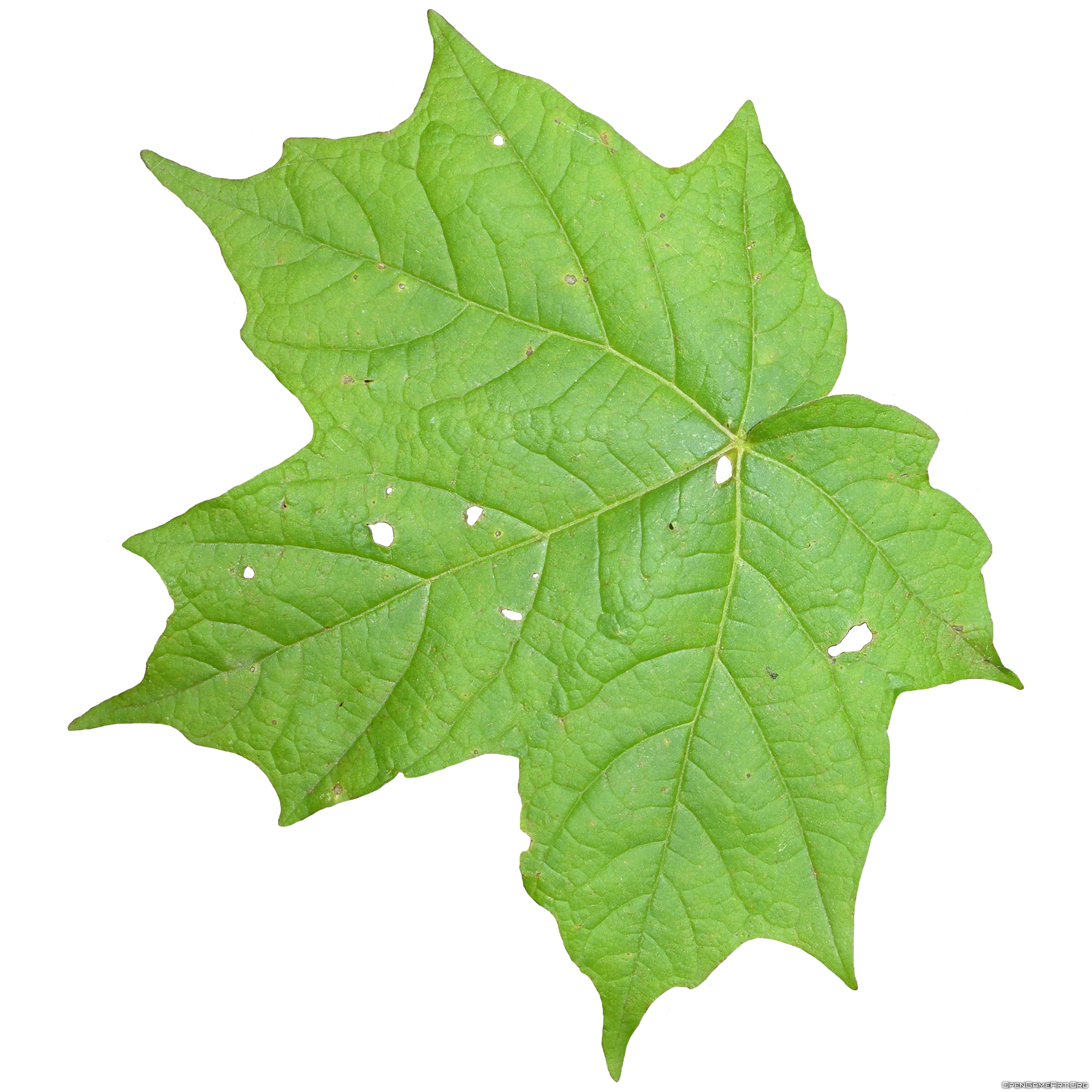 Leaf clipart icon. Free download of icons