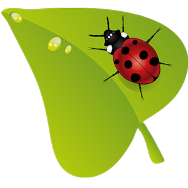 Beruu ky insect clip. Ladybug clipart green ladybug