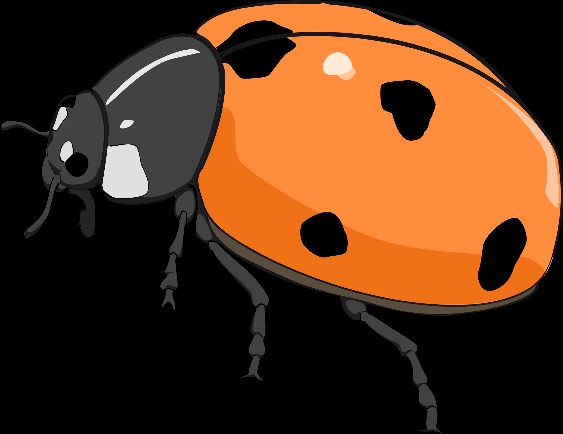 Coccinelle ladybug big image. Ladybugs clipart five