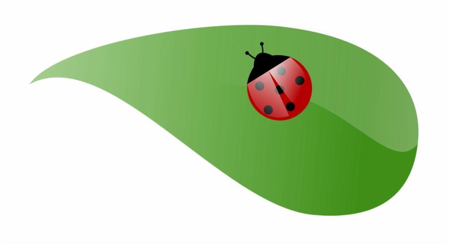 Ladybug clipart leaf clip art. Lady beetle ladybird on