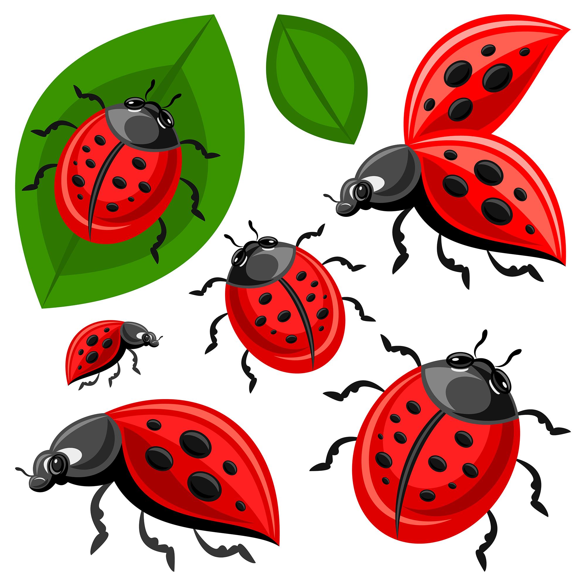Ladybird beetle clip art. Ladybug clipart watercolor
